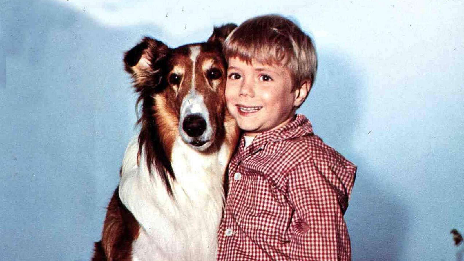 """Jon Provost in """"Lassie"""""""